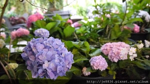 0513關西花鳥園 (13).jpg