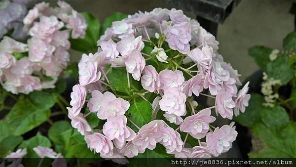 0513關西花鳥園 (24).jpg