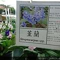 0513關西花鳥園 (26).jpg