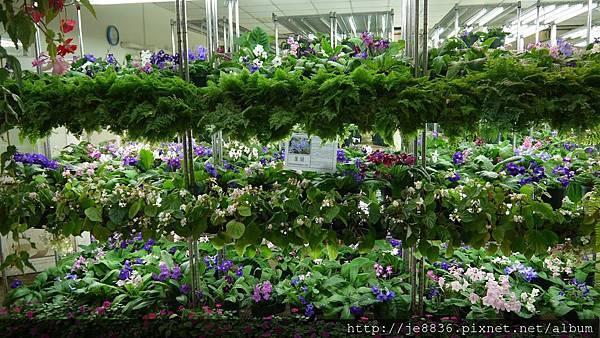 0513關西花鳥園 (27).jpg