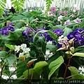 0513關西花鳥園 (29).jpg