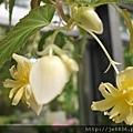 0513關西花鳥園 (38).jpg