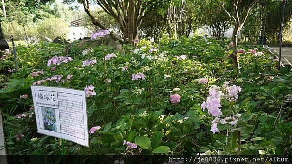 0513關西花鳥園 (55).jpg