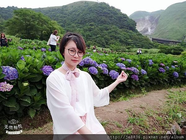 0610繡球花4.jpg