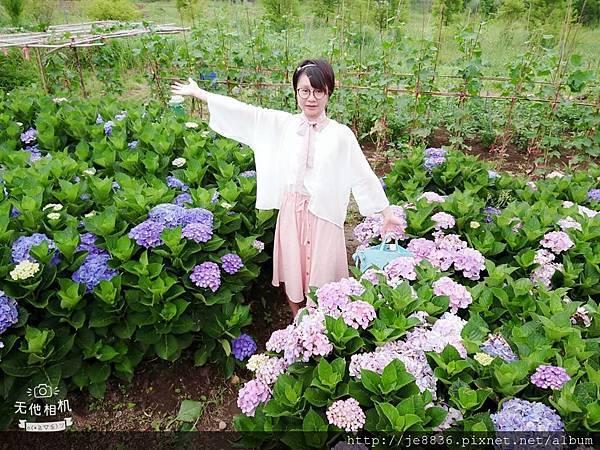 0610繡球花6.jpg