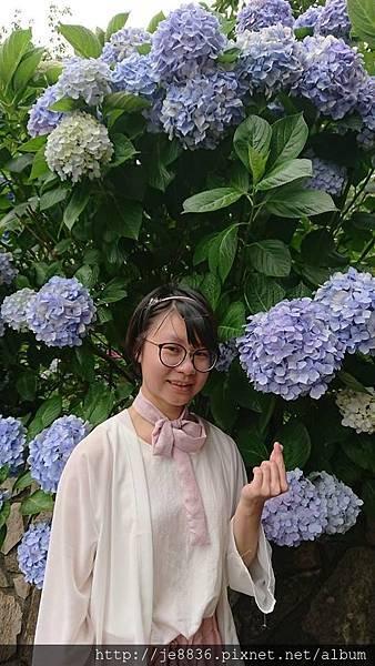 0610繡球花42.jpg
