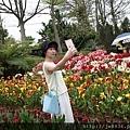0404彩色海芋48.jpg