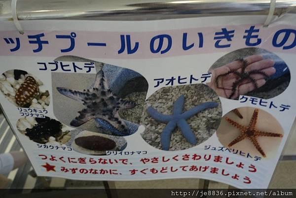 0720奄美海洋館 (30).jpg