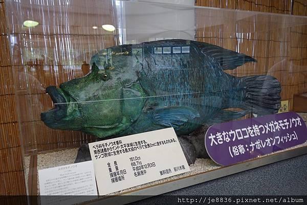 0720奄美海洋館 (40).jpg