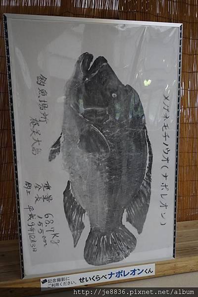 0720奄美海洋館 (41).jpg