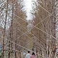 1104莊敬大池11.jpg