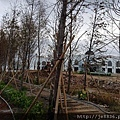 1104莊敬大池12.jpg