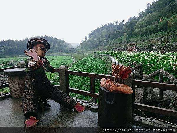0324海芋季34.jpg