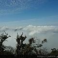 0304觀霧~雲霧步道 (4).jpg