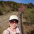 0304觀霧~雲霧步道 (71).jpg