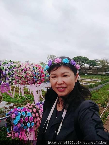 2019桃園~彩色海芋季8.jpg