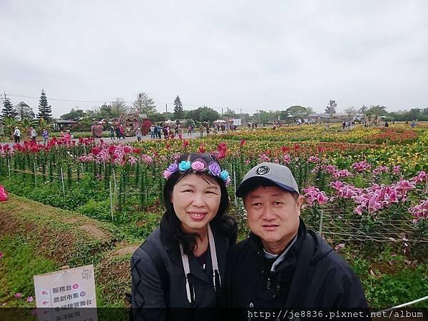 2019桃園~彩色海芋季30.jpg