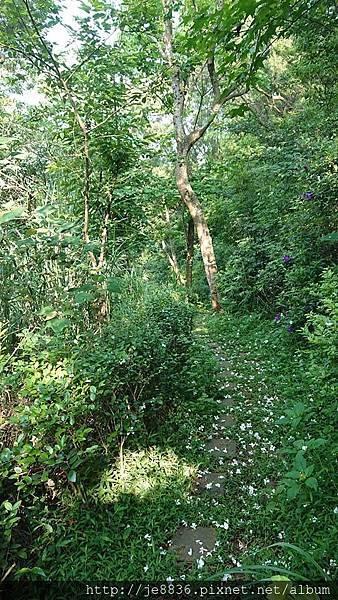 0424新林步道2.jpg