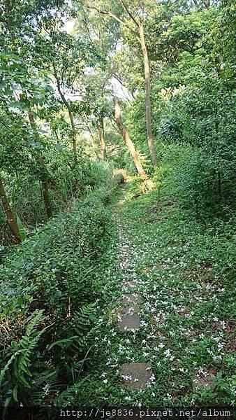 0424新林步道3.jpg