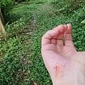 0424新林步道10.jpg