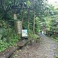 0503土城桐花季 (2).jpg