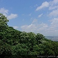 0503土城桐花季 (11).jpg