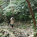 0503土城桐花季 (23).jpg