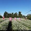 0912韭菜花田32.jpg