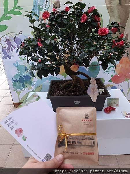 2020台北茶花展19.jpg