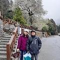 2010霧社櫻王56.jpg