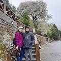2010霧社櫻王55.jpg