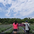 0409葛瑞絲香草田24.jpg