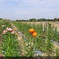 0501向陽農場18.jpg