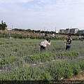 0501向陽農場40.jpg