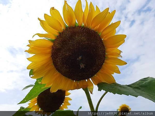 0501向陽農場23.jpg