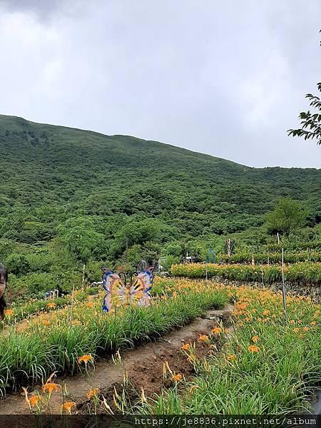 0931竹子湖16.jpg