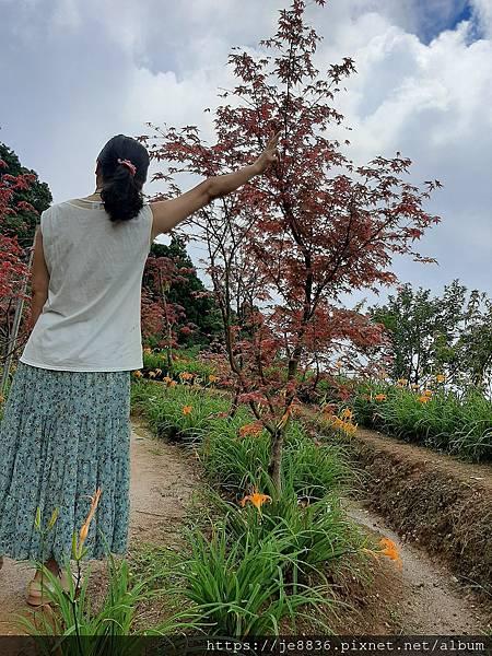 0931竹子湖20.jpg