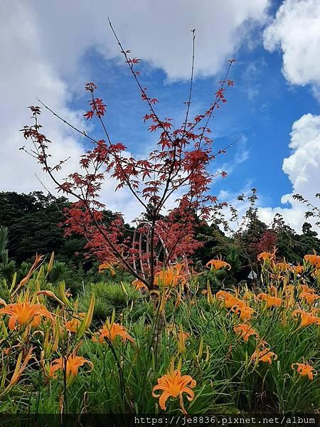 0931竹子湖25.jpg