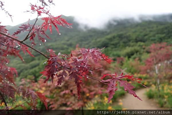0931竹子湖29.jpg