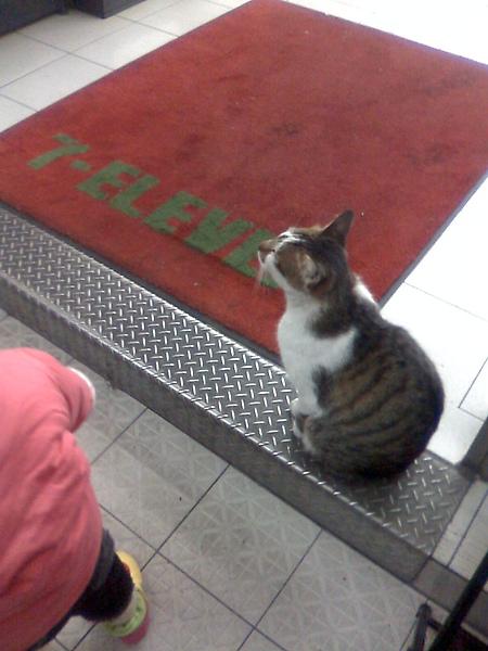 不怕人的可愛貓咪