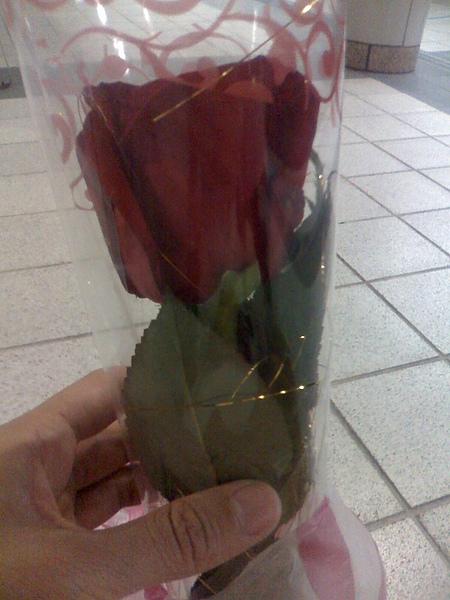 胖子送的玫瑰花4