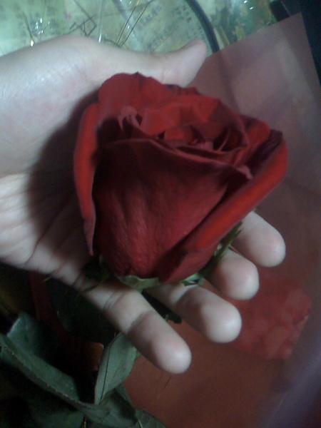 胖子送的玫瑰花3