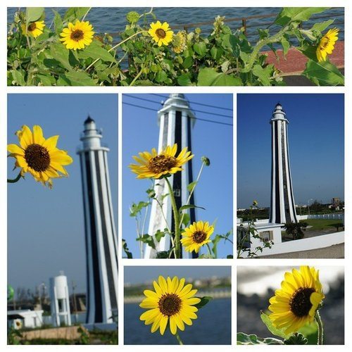 燈塔。向日葵
