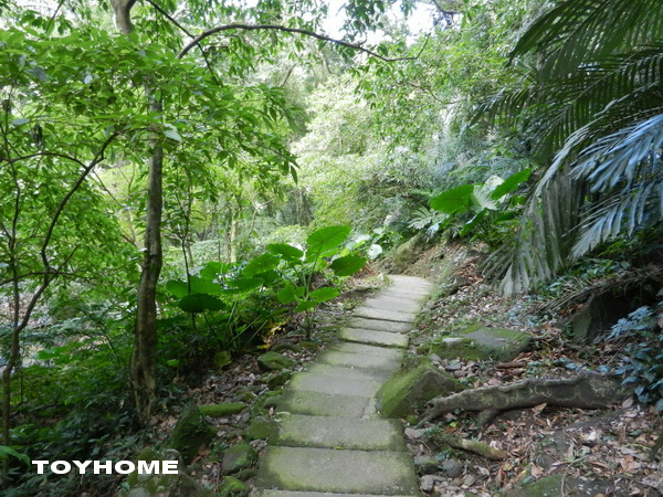 %3C;大板根森林溫泉渡假村-原始熱帶雨林 2013%2F10%2F19%3E