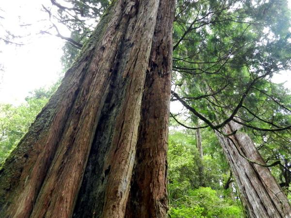 %3C;拉拉山自然保護區 2014%2F8%2F9%3E