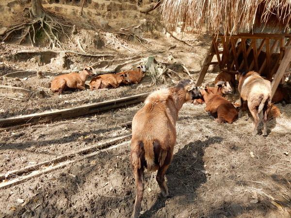 %3C;新竹綠世界生態農場 2016%2F2%2F7%3E