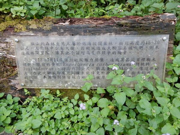 DSCN8567.JPG