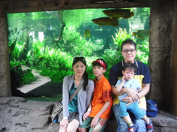 <峇里島Bail Safari&Marine Park野生動物園2011/2/13>