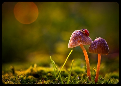 coleoptera,color,palette,depth,of,field,fungi,light,macro-2b6e9d1194990c93327ca88c754896c9_h.jpg