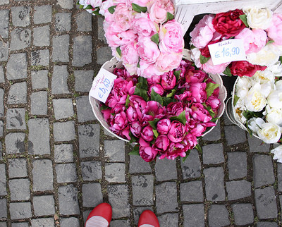 flowers,pavement,pink,purple-e9b0640282bb40cad82e2deeb49d242b_h.jpg